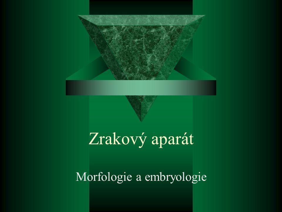 Zrakový aparát Morfologie a embryologie