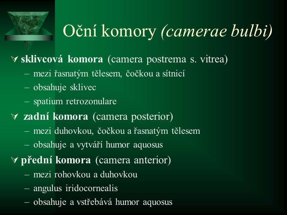 Oční komory (camerae bulbi)  sklivcová komora (camera postrema s. vitrea) –mezi řasnatým tělesem, čočkou a sítnicí –obsahuje sklivec –spatium retrozo