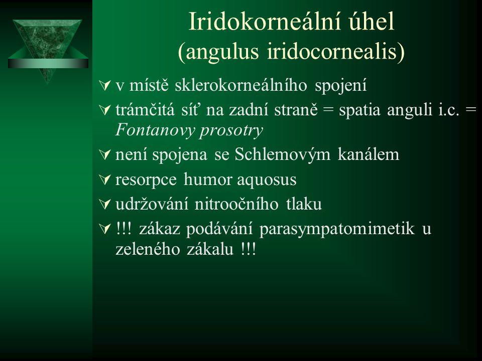 Iridokorneální úhel (angulus iridocornealis)  v místě sklerokorneálního spojení  trámčitá síť na zadní straně = spatia anguli i.c. = Fontanovy proso