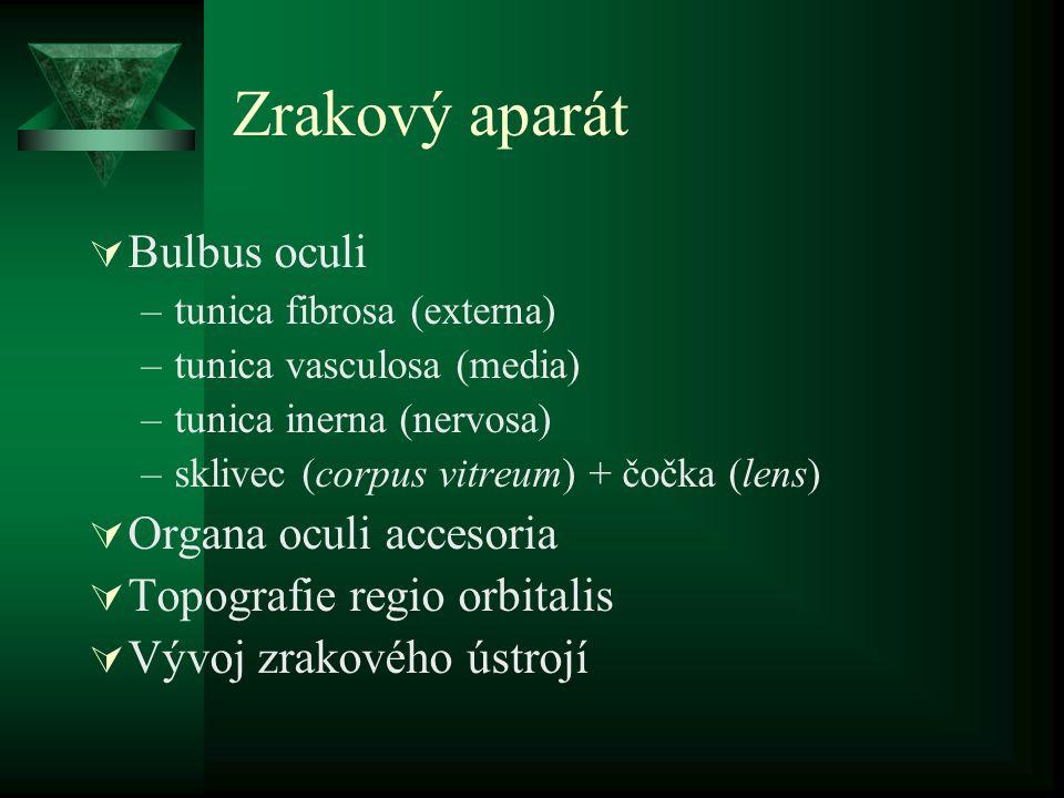 Zrakový aparát  Bulbus oculi –tunica fibrosa (externa) –tunica vasculosa (media) –tunica inerna (nervosa) –sklivec (corpus vitreum) + čočka (lens) 