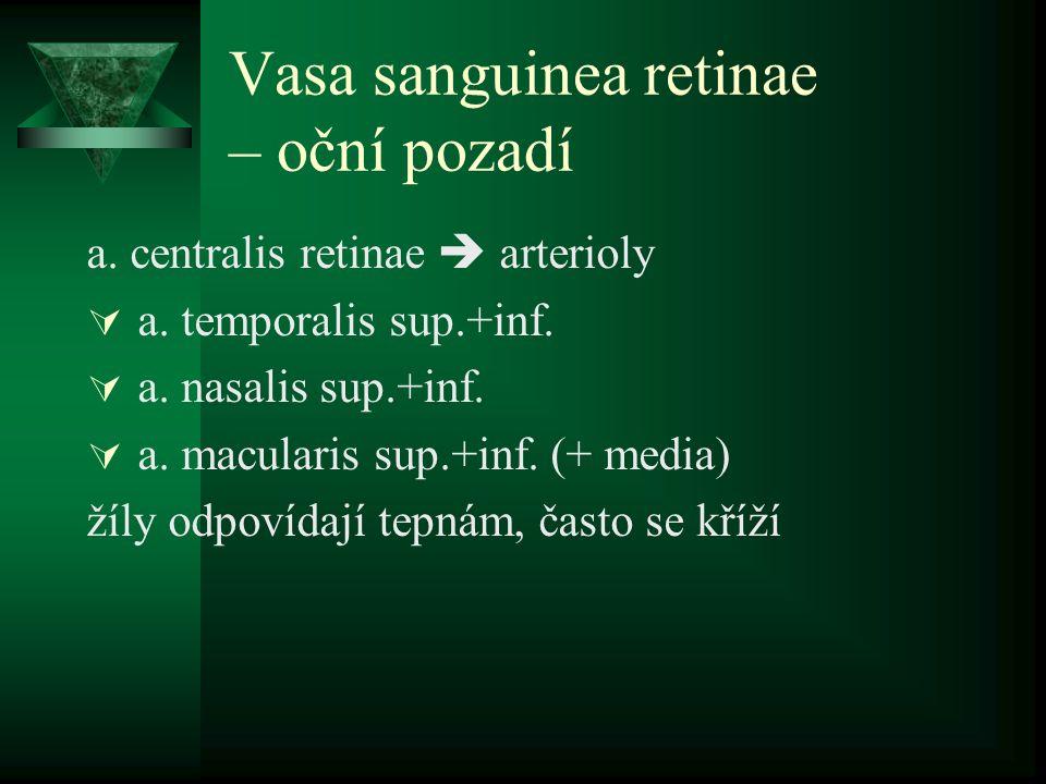 Vasa sanguinea retinae – oční pozadí a. centralis retinae  arterioly  a. temporalis sup.+inf.  a. nasalis sup.+inf.  a. macularis sup.+inf. (+ med