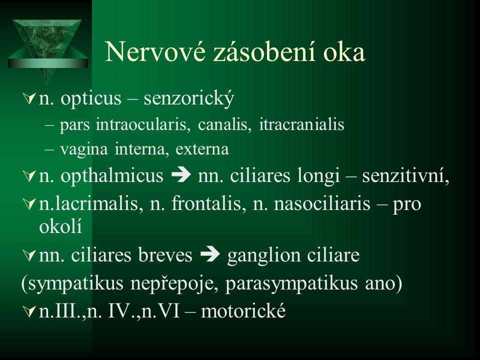 Nervové zásobení oka  n. opticus – senzorický –pars intraocularis, canalis, itracranialis –vagina interna, externa  n. opthalmicus  nn. ciliares lo