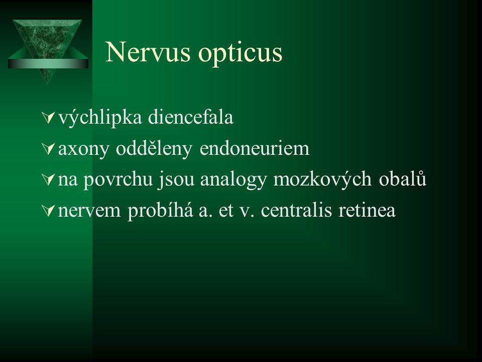 Nervus opticus  výchlipka diencefala  axony odděleny endoneuriem  na povrchu jsou analogy mozkových obalů  nervem probíhá a. et v. centralis retin