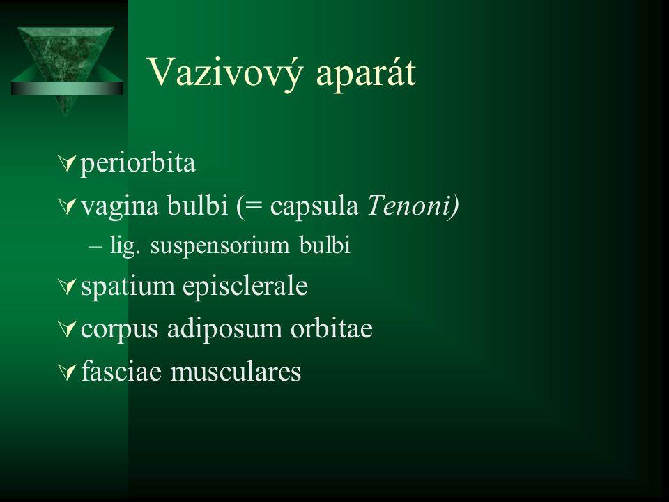 Vazivový aparát  periorbita  vagina bulbi (= capsula Tenoni) –lig. suspensorium bulbi  spatium episclerale  corpus adiposum orbitae  fasciae musc