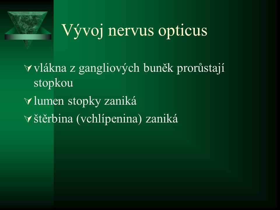 Vývoj nervus opticus  vlákna z gangliových buněk prorůstají stopkou  lumen stopky zaniká  štěrbina (vchlípenina) zaniká