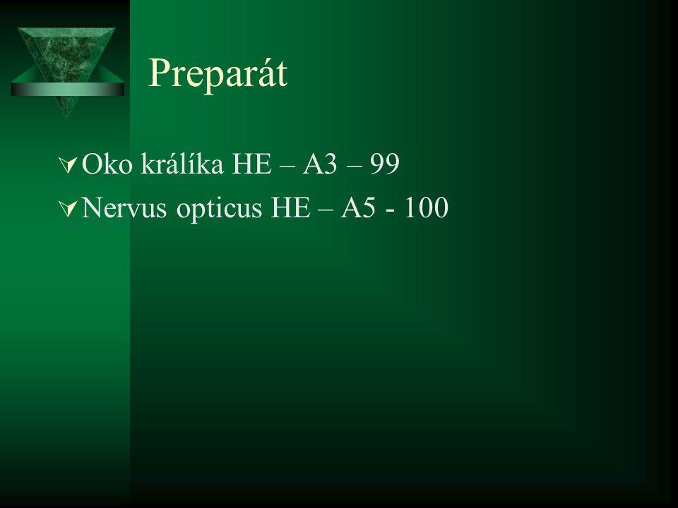 Přídatné orgány oka (Structrae oculi accessoriae)  Vazivový aparát (apparatus ligamentosus)  Víčka (palpebra)  Spojivka (conjunctiva)  Slzný aparát (apparatus lacrimalis)  Svalový aparát (apparatus muscularis)  Obočí (supercilium)