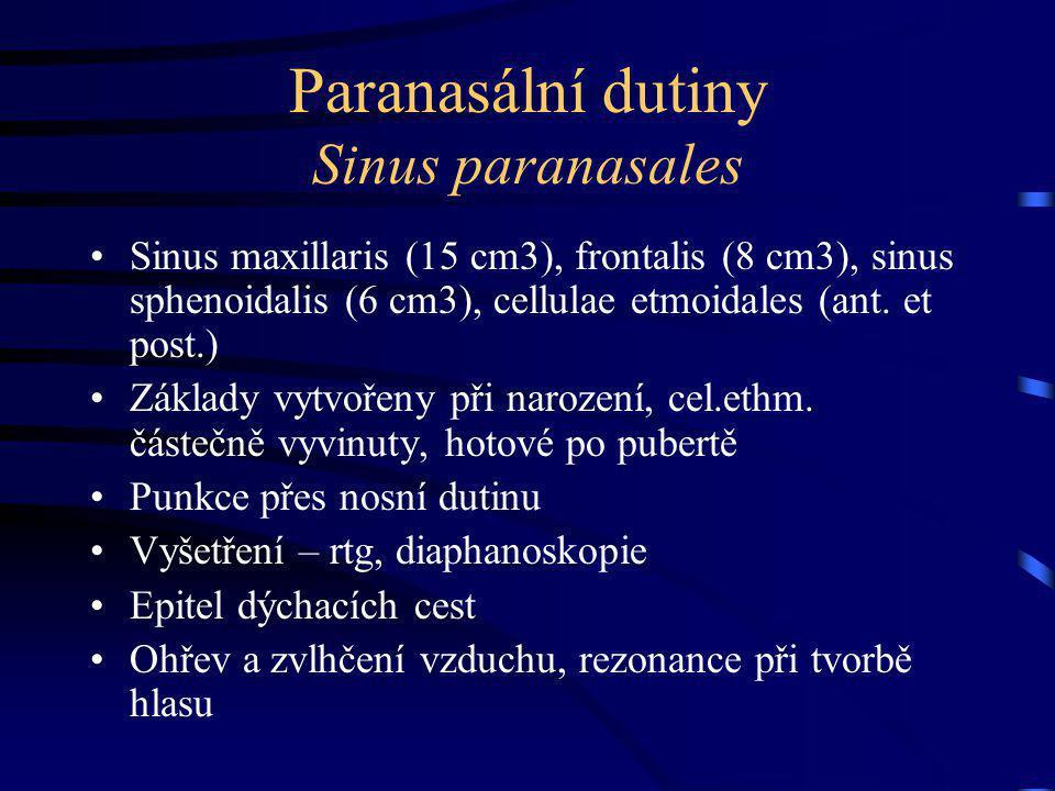 Paranasální dutiny Sinus paranasales Sinus maxillaris (15 cm3), frontalis (8 cm3), sinus sphenoidalis (6 cm3), cellulae etmoidales (ant.