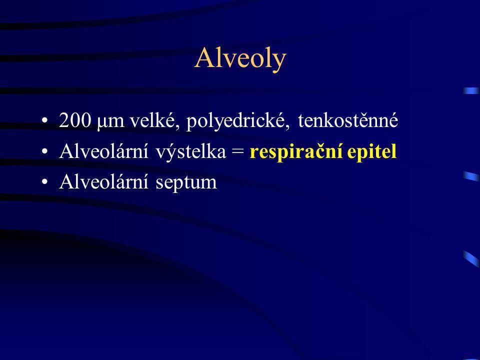Alveoly 200 μm velké, polyedrické, tenkostěnné Alveolární výstelka = respirační epitel Alveolární septum