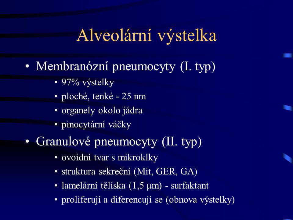 Alveolární výstelka Membranózní pneumocyty (I.
