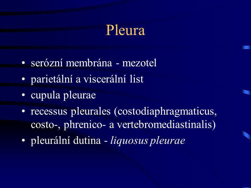 Pleura serózní membrána - mezotel parietální a viscerální list cupula pleurae recessus pleurales (costodiaphragmaticus, costo-, phrenico- a vertebromediastinalis) pleurální dutina - liquosus pleurae