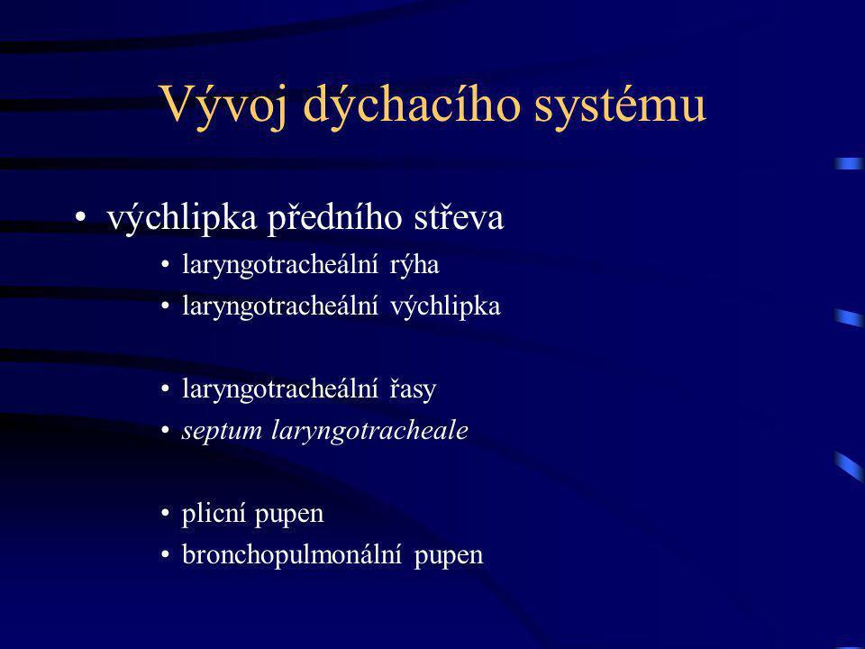 Vývoj dýchacího systému výchlipka předního střeva laryngotracheální rýha laryngotracheální výchlipka laryngotracheální řasy septum laryngotracheale plicní pupen bronchopulmonální pupen
