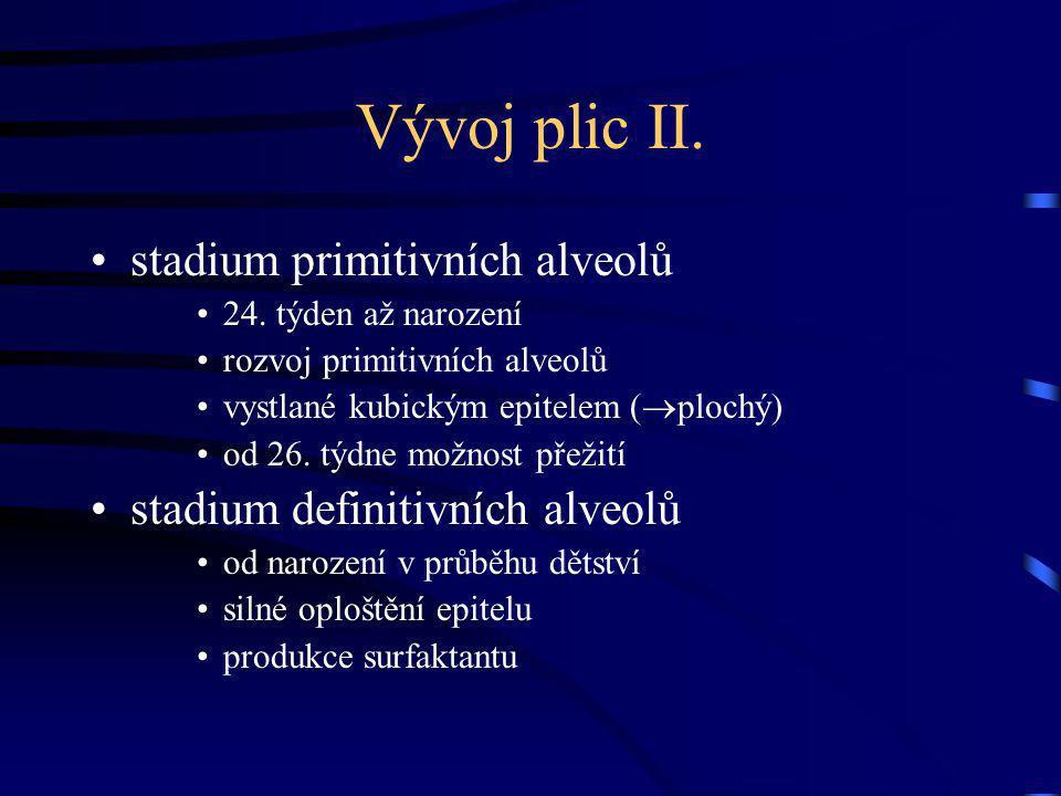 Vývoj plic II.stadium primitivních alveolů 24.