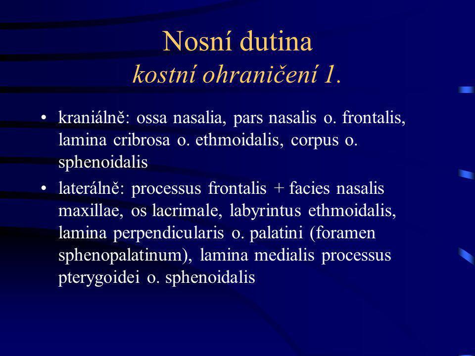 Nosní dutina kostní ohraničení 1.kraniálně: ossa nasalia, pars nasalis o.