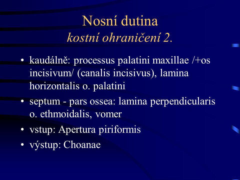 Nosní dutina - průchody conchae nasales (sup., media, inf.) dělí prostor na: meatus nasi superior – recessus sphenoethmoidalis (malá concha nasalis suprema), apertura sisus sphenoidalis meatus nasi medius – hiatus maxillaris / semilunaris (antrum Highmori), infundibulum ethmoidale, ductus frontonasalis meatus nasi inferior – apertura ductus nasolacrimalis meatus nasi communis - (společná část bez skořep při septum nasi) meatus nasopharyngeus - (spol.