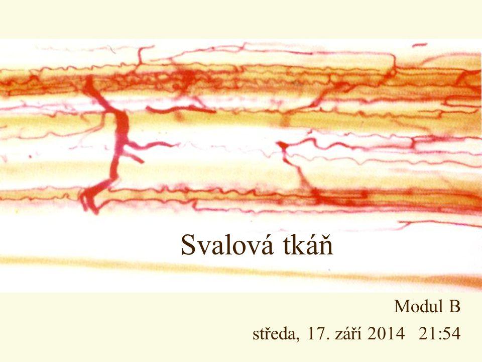 Svalová tkáň Modul B středa, 17. září 2014 21:55