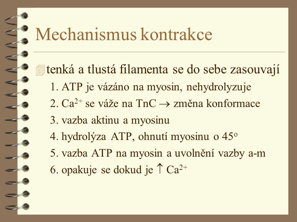 Mechanismus kontrakce 4 tenká a tlustá filamenta se do sebe zasouvají 1.