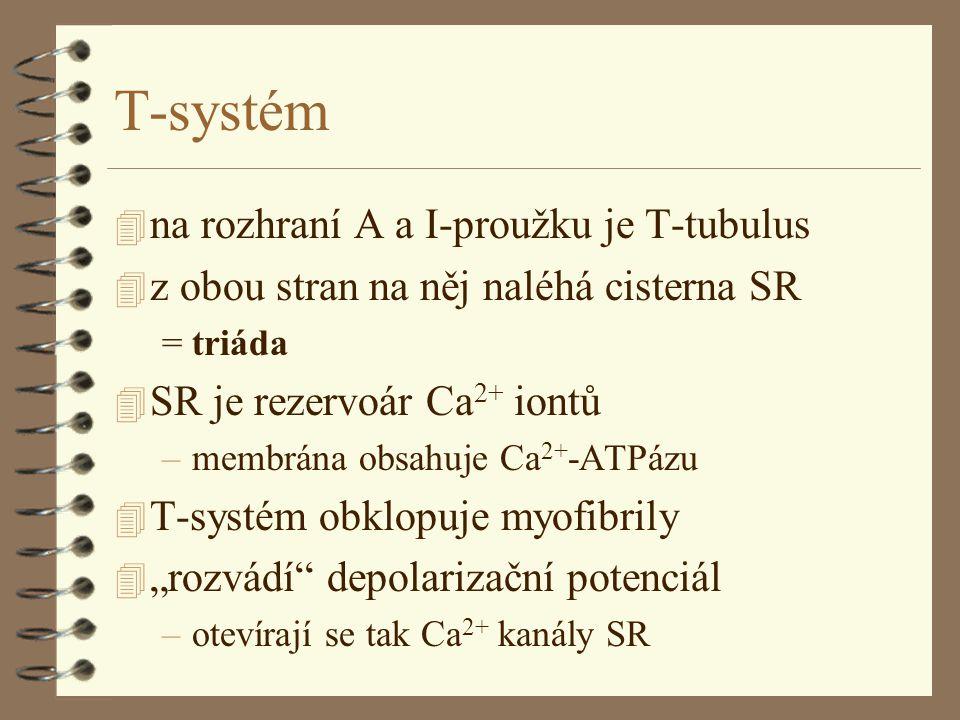 """T-systém 4 na rozhraní A a I-proužku je T-tubulus 4 z obou stran na něj naléhá cisterna SR = triáda 4 SR je rezervoár Ca 2+ iontů –membrána obsahuje Ca 2+ -ATPázu 4 T-systém obklopuje myofibrily 4 """"rozvádí depolarizační potenciál –otevírají se tak Ca 2+ kanály SR"""