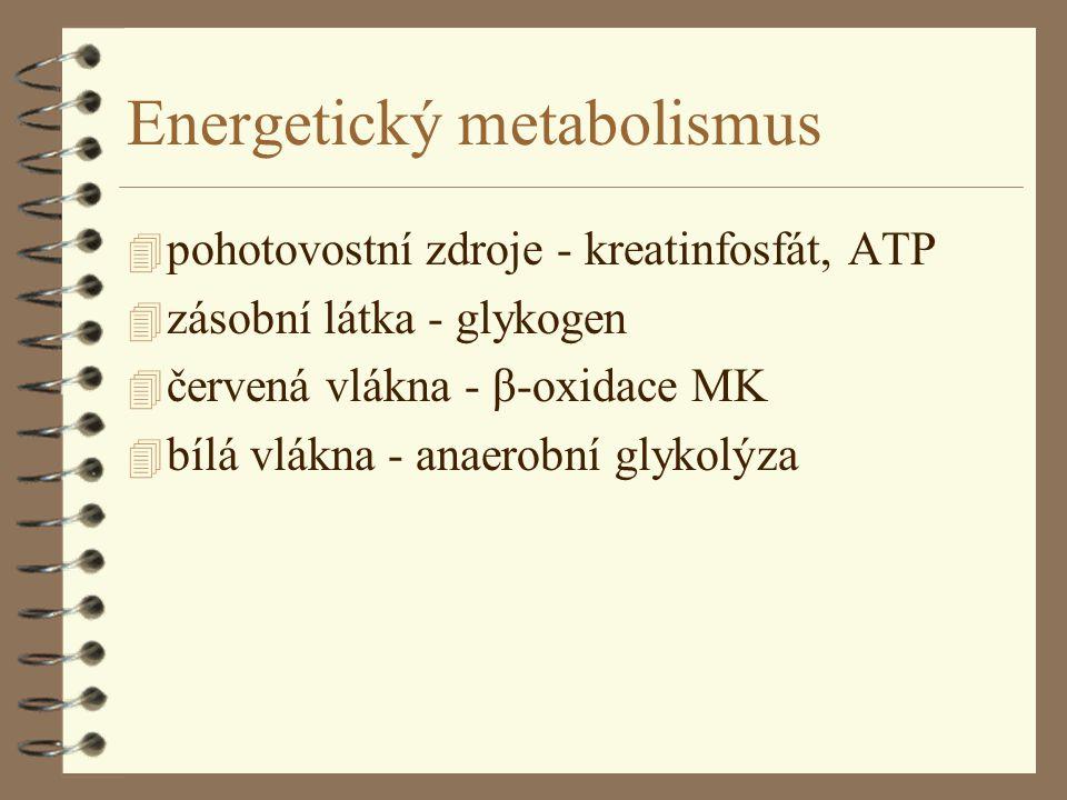 Energetický metabolismus 4 pohotovostní zdroje - kreatinfosfát, ATP 4 zásobní látka - glykogen 4 červená vlákna - β-oxidace MK 4 bílá vlákna - anaerobní glykolýza
