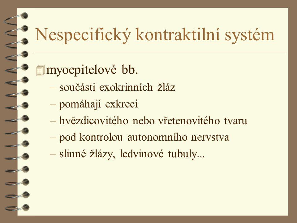 Nespecifický kontraktilní systém 4 myoepitelové bb.