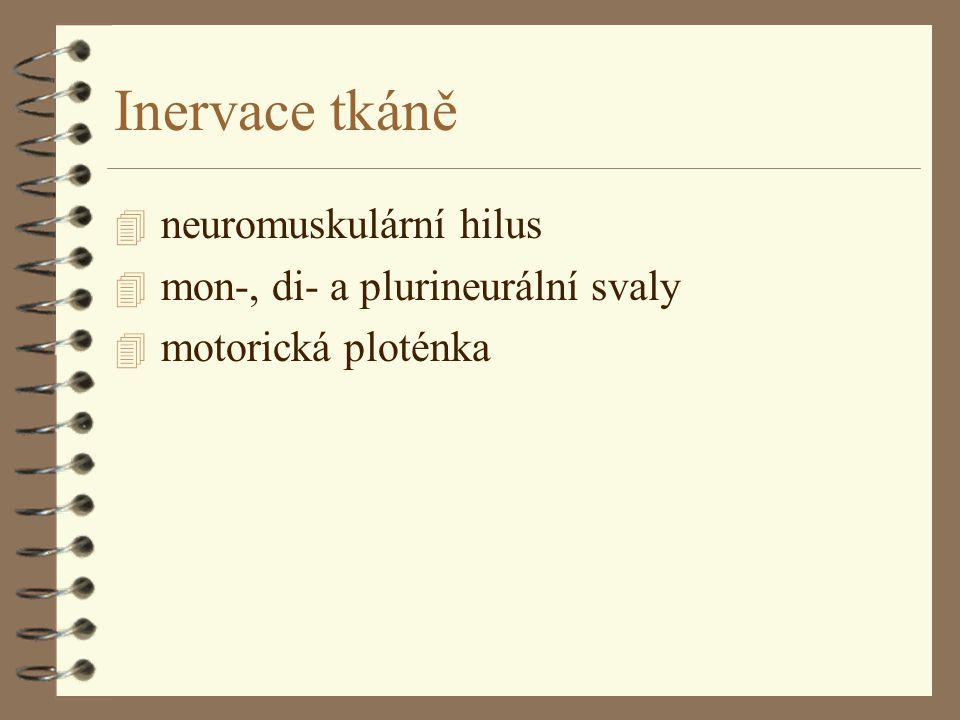 Inervace tkáně 4 neuromuskulární hilus 4 mon-, di- a plurineurální svaly 4 motorická ploténka