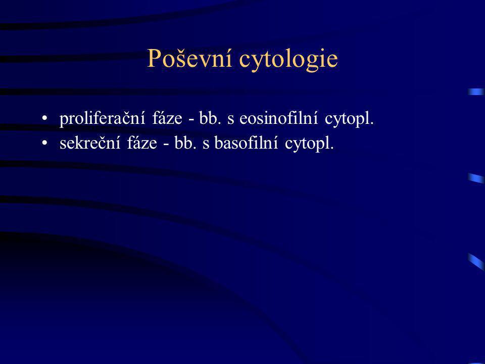 Poševní cytologie proliferační fáze - bb. s eosinofilní cytopl. sekreční fáze - bb. s basofilní cytopl.