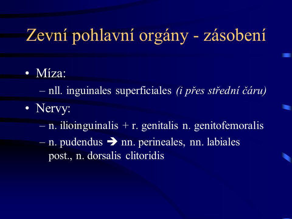 Zevní pohlavní orgány - zásobení Míza: –nll. inguinales superficiales (i přes střední čáru) Nervy: –n. ilioinguinalis + r. genitalis n. genitofemorali