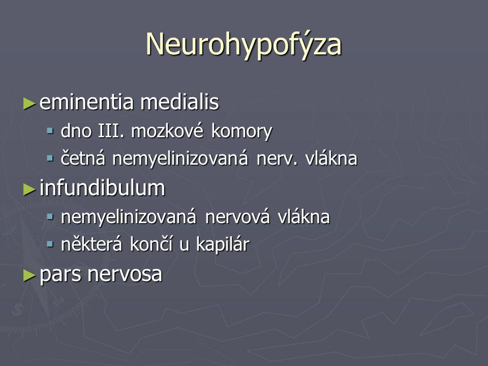 Neurohypofýza ► eminentia medialis  dno III. mozkové komory  četná nemyelinizovaná nerv. vlákna ► infundibulum  nemyelinizovaná nervová vlákna  ně