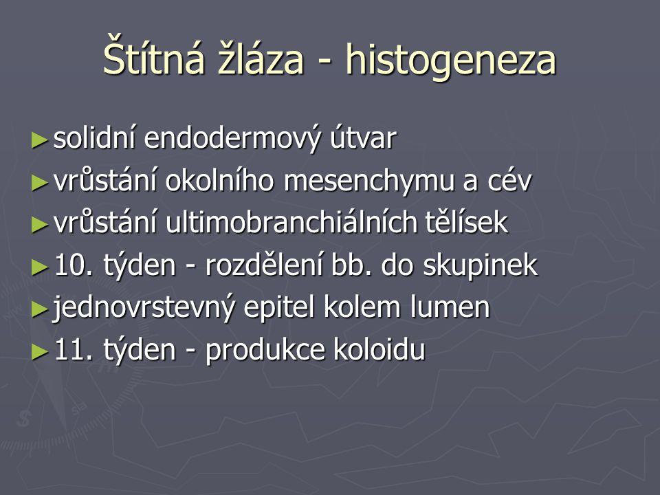 Štítná žláza - histogeneza ► solidní endodermový útvar ► vrůstání okolního mesenchymu a cév ► vrůstání ultimobranchiálních tělísek ► 10. týden - rozdě