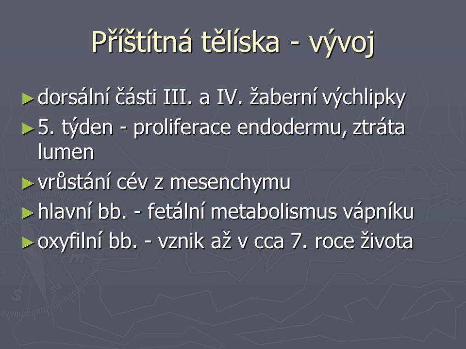Příštítná tělíska - vývoj ► dorsální části III. a IV. žaberní výchlipky ► 5. týden - proliferace endodermu, ztráta lumen ► vrůstání cév z mesenchymu ►