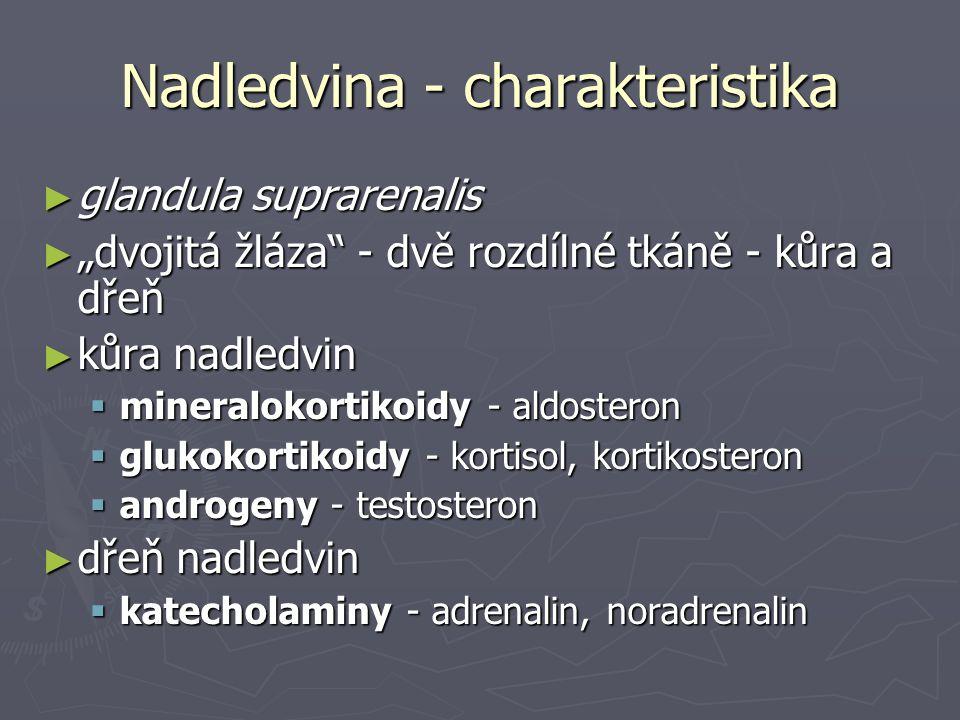 """Nadledvina - charakteristika ► glandula suprarenalis ► """"dvojitá žláza"""" - dvě rozdílné tkáně - kůra a dřeň ► kůra nadledvin  mineralokortikoidy - aldo"""