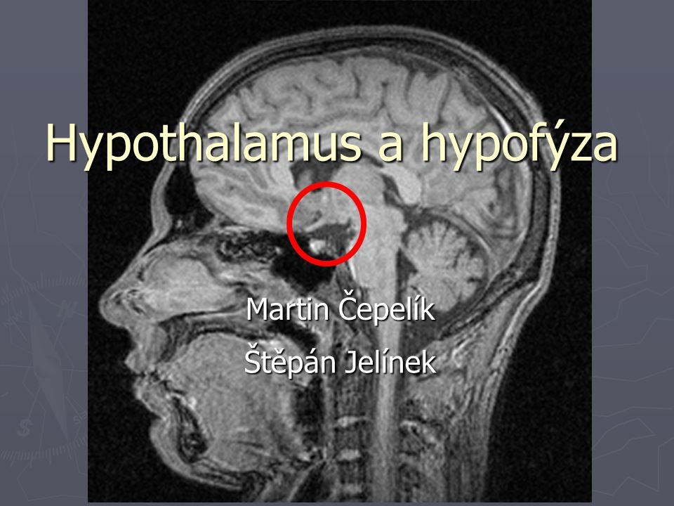 Hypothalamus a hypofýza Martin Čepelík Štěpán Jelínek