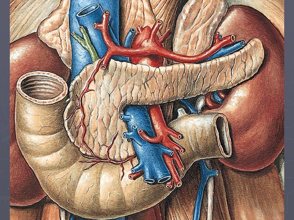 Pankreas - opakování ► exokrinní a endokrinní část ► topografie pankreatu ► cévní zásobení pankreatu  zásobení langerhansových ostrůvků??? ► (operačn