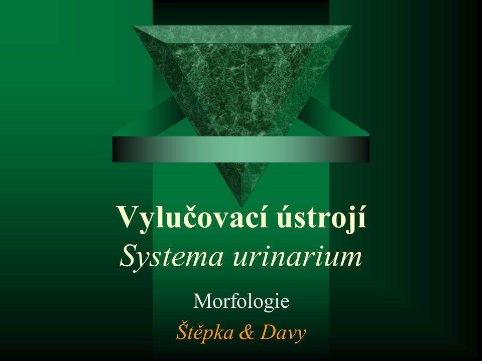 Vylučovací ústrojí Systema urinarium Morfologie Štěpka & Davy