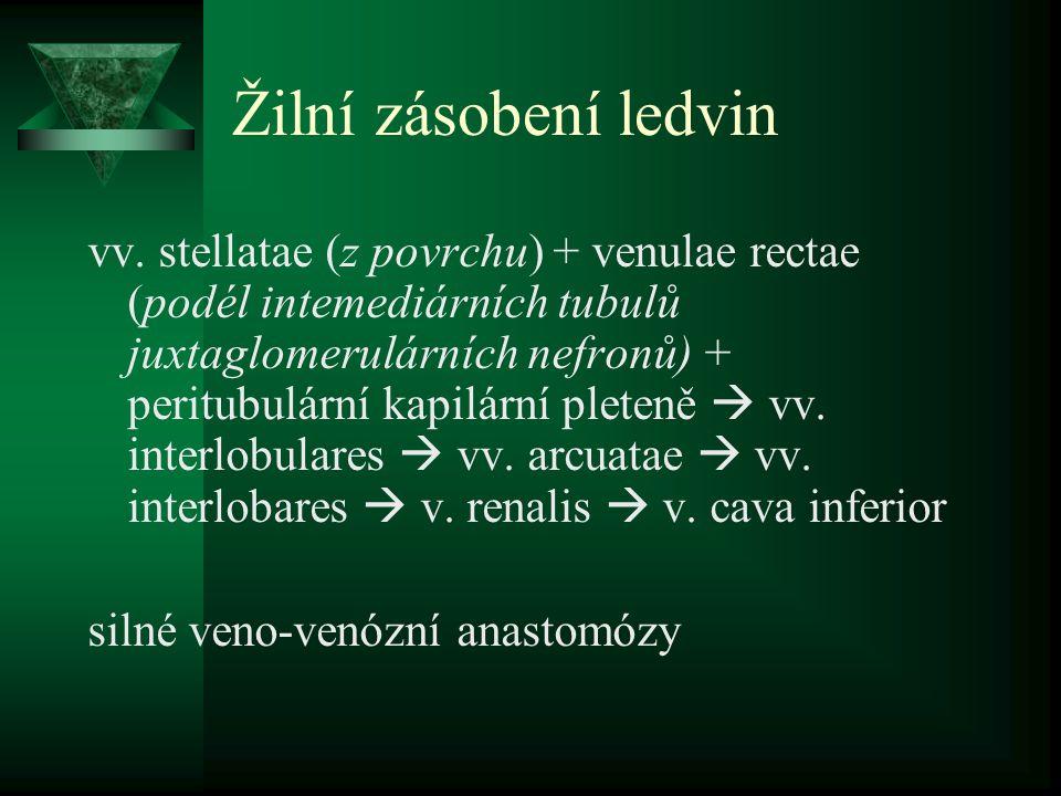 Žilní zásobení ledvin vv.