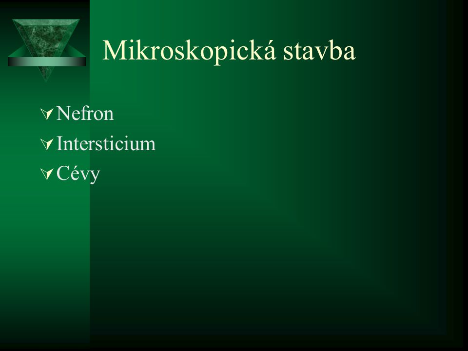 Mikroskopická stavba  Nefron  Intersticium  Cévy