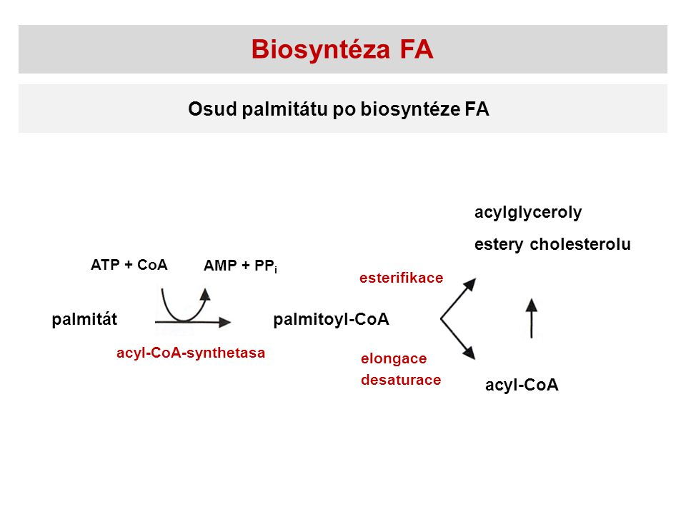 Biosyntéza FA Osud palmitátu po biosyntéze FA palmitátpalmitoyl-CoA acylglyceroly estery cholesterolu acyl-CoA esterifikace elongace desaturace acyl-C