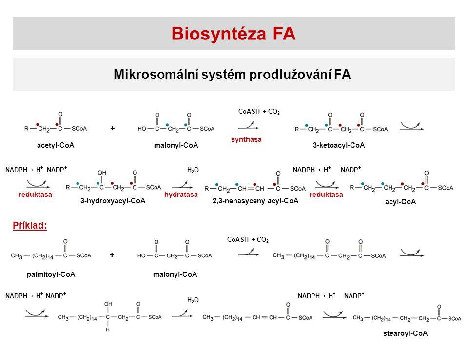 Biosyntéza FA Mikrosomální systém prodlužování FA acetyl-CoAmalonyl-CoA3-ketoacyl-CoA 3-hydroxyacyl-CoA 2,3-nenasycený acyl-CoA acyl-CoA CoASH + CO 2