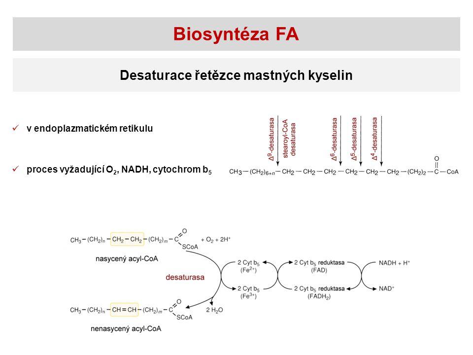 Biosyntéza FA Desaturace řetězce mastných kyselin v endoplazmatickém retikulu proces vyžadující O 2, NADH, cytochrom b 5
