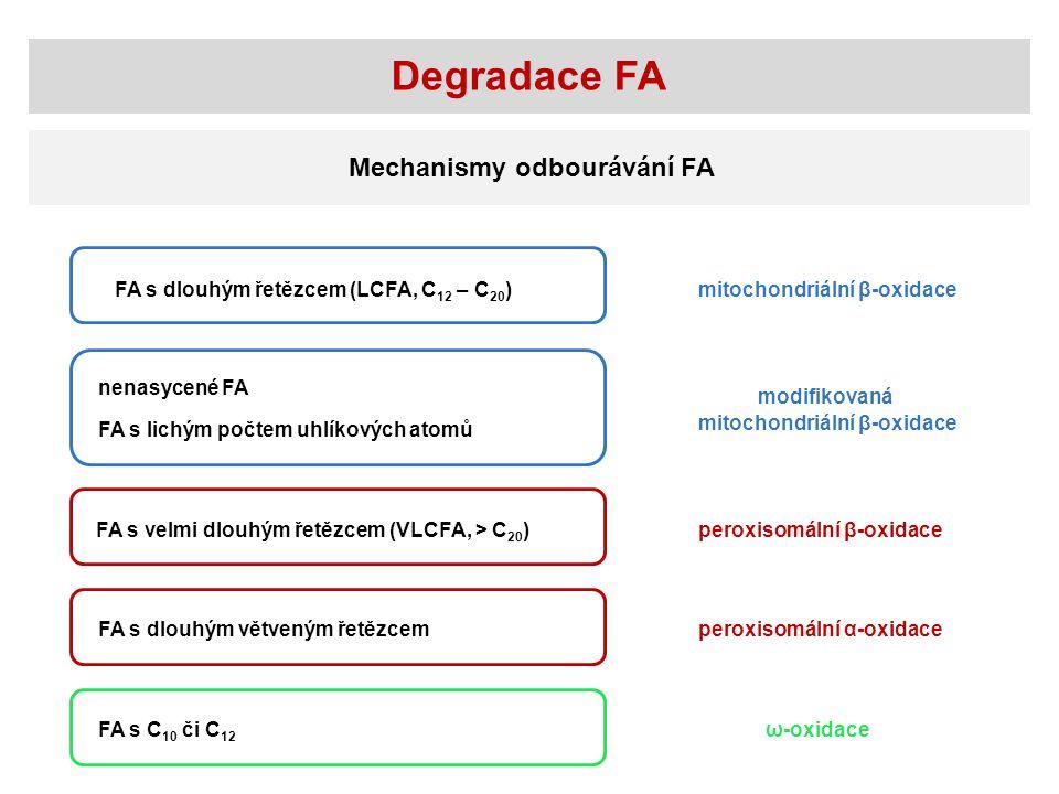 Degradace FA Mechanismy odbourávání FA FA s dlouhým řetězcem (LCFA, C 12 – C 20 ) nenasycené FA FA s lichým počtem uhlíkových atomů FA s velmi dlouhým