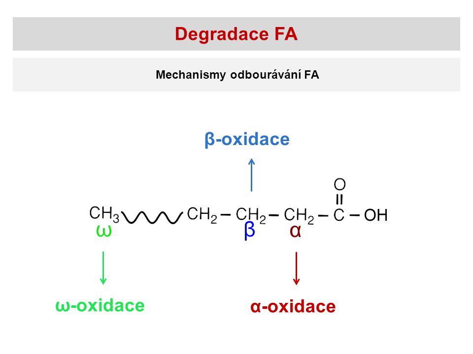 Degradace FA Mechanismy odbourávání FA α-oxidace ω-oxidace β-oxidace