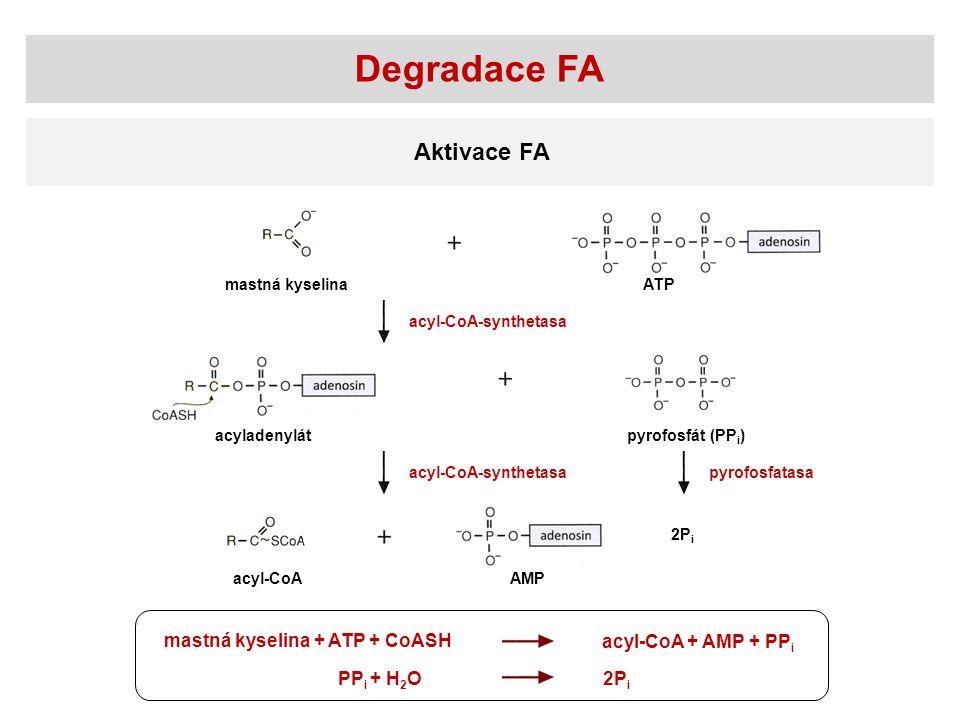 Aktivace FA mastná kyselinaATP pyrofosfát (PP i ) acyl-CoAAMP acyl-CoA-synthetasa pyrofosfatasa acyladenylát mastná kyselina + ATP + CoASH acyl-CoA +