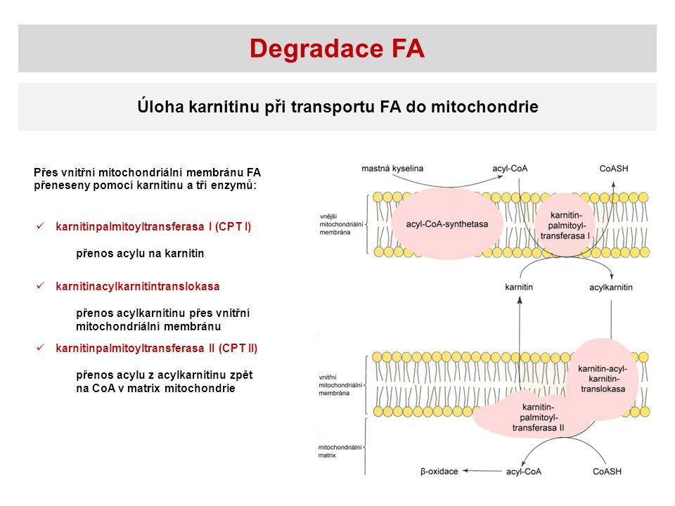 Úloha karnitinu při transportu FA do mitochondrie Přes vnitřní mitochondriální membránu FA přeneseny pomocí karnitinu a tří enzymů: karnitinpalmitoylt
