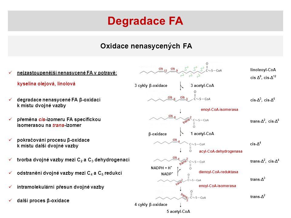 Oxidace nenasycených FA 3 acetyl-CoA3 cykly β-oxidace β-oxidace 1 acetyl-CoA linoleoyl-CoA NADPH + H + NADP + enoyl-CoA-isomerasa dienoyl-CoA-reduktas