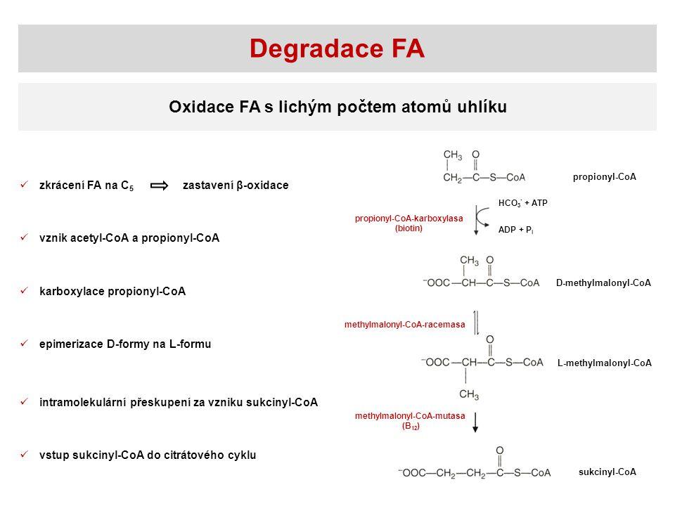 Degradace FA Oxidace FA s lichým počtem atomů uhlíku propionyl-CoA D-methylmalonyl-CoA L-methylmalonyl-CoA sukcinyl-CoA HCO 3 - + ATP ADP + P i propio