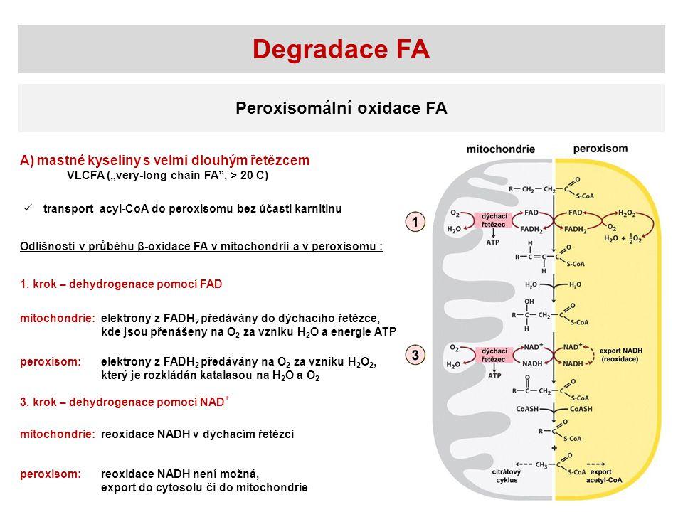 """Degradace FA Peroxisomální oxidace FA A) mastné kyseliny s velmi dlouhým řetězcem VLCFA (""""very-long chain FA"""", > 20 C) Odlišnosti v průběhu β-oxidace"""