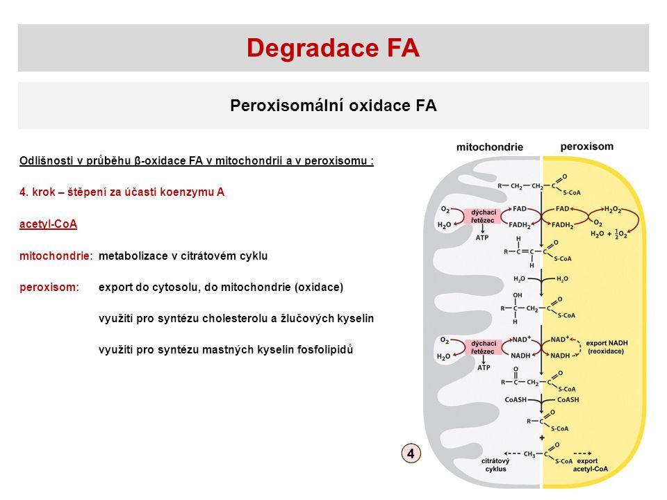 Degradace FA Peroxisomální oxidace FA Odlišnosti v průběhu β-oxidace FA v mitochondrii a v peroxisomu : 4. krok – štěpení za účasti koenzymu A mitocho