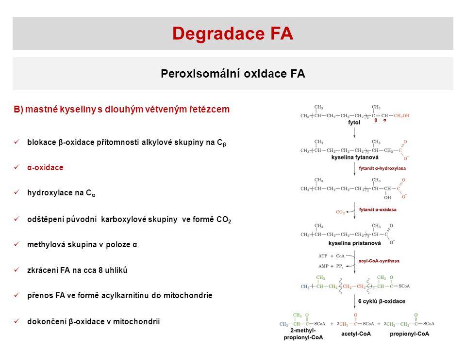 Degradace FA Peroxisomální oxidace FA B) mastné kyseliny s dlouhým větveným řetězcem blokace β-oxidace přítomností alkylové skupiny na C β α-oxidace h