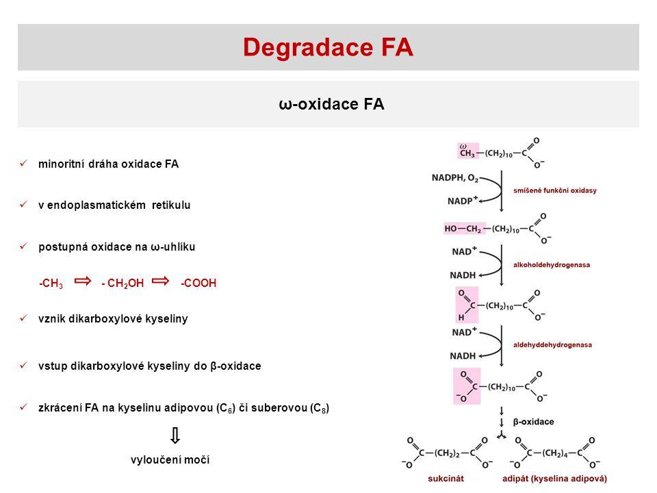 Degradace FA ω-oxidace FA minoritní dráha oxidace FA v endoplasmatickém retikulu postupná oxidace na ω-uhlíku -CH 3 - CH 2 OH -COOH vznik dikarboxylov