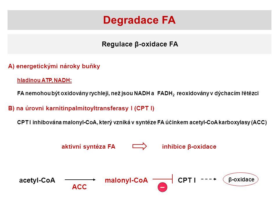 Degradace FA Regulace β-oxidace FA acetyl-CoAmalonyl-CoACPT I β-oxidace ACC A) energetickými nároky buňky hladinou ATP, NADH: FA nemohou být oxidovány