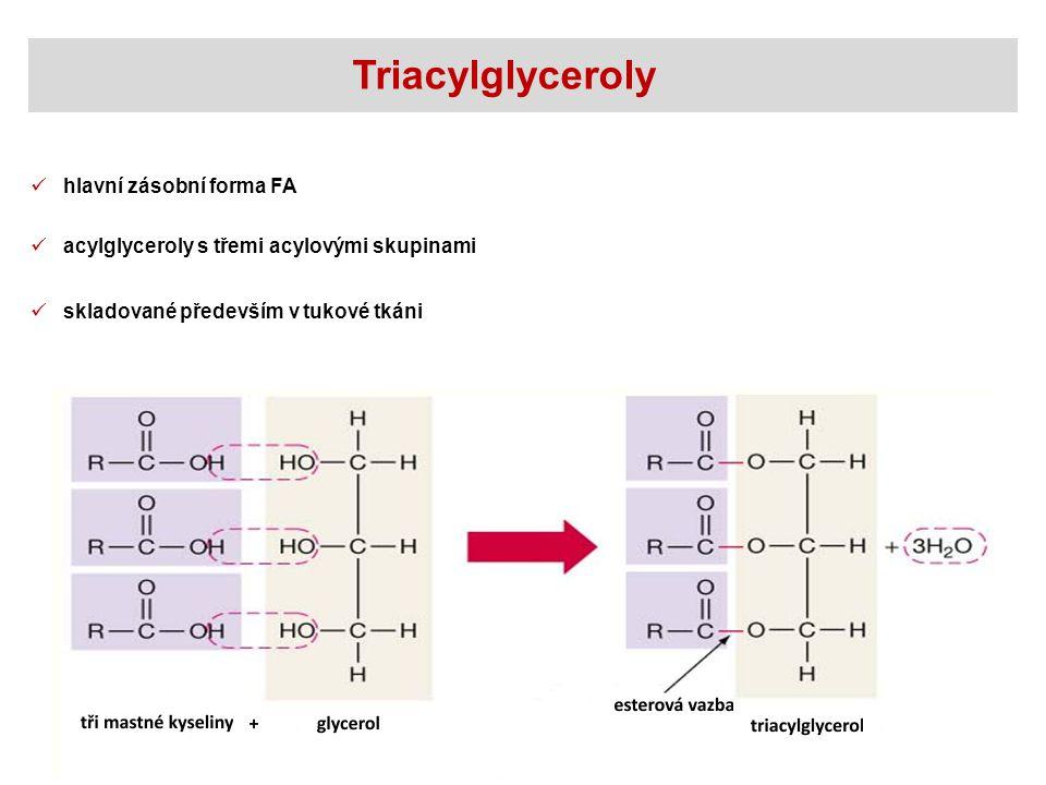 Triacylglyceroly hlavní zásobní forma FA acylglyceroly s třemi acylovými skupinami skladované především v tukové tkáni